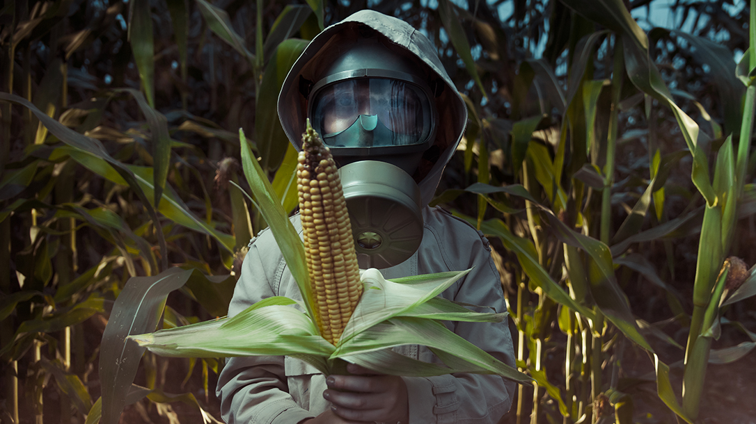 Are farmers harvesting the corn or is it the scientists with and their GMOs?
