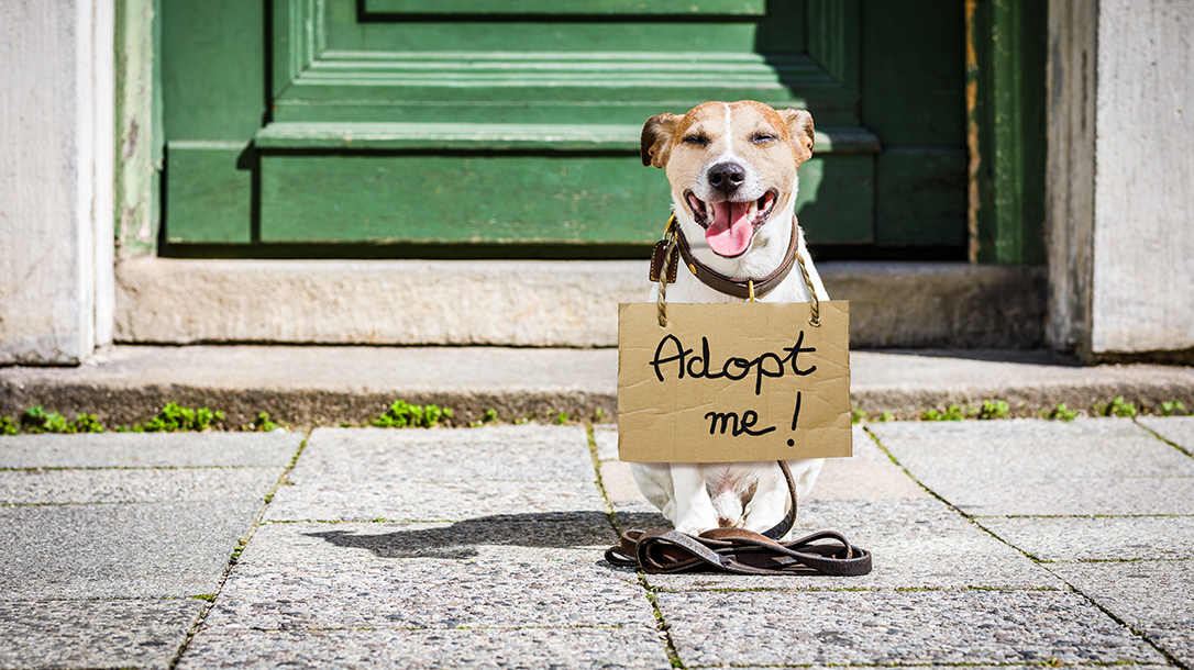 Are shelter dogs mans best friend? You betcha!